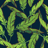 Banana leaves on dark blue background. Banana plant leaves on a dark blue background. Tropical jungle. Seamless pattern with Irregular distribution of elements Stock Photos