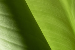 Banana leaves Stock Photography