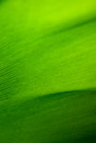 Banana leaves macro Royalty Free Stock Images