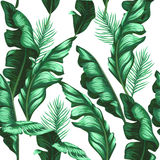Banana leaves pattern. Tropical background. Banana leaves pattern. Tropical summer background Royalty Free Stock Photo