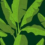 Banana leaves pattern vector Stock Photo