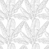 Banana leaves pattern vector Stock Images