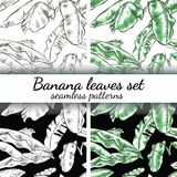 Banana leaves set. Hand-drawn style Royalty Free Stock Photo