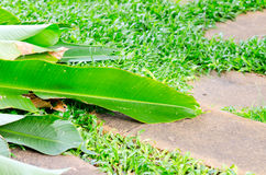 Banana leaves on stone path and grass Royalty Free Stock Image