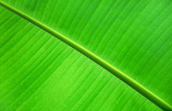 Banana leaves Stock Photos