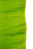 Banana leaves Stock Images