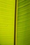 Banana liść Obrazy Royalty Free