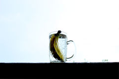 Banana like water to clearring your live Royalty Free Stock Photos