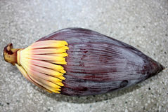 Banana male inflorescence. Plantain, French plantain, Kela, Musa x paradisiaca, red terminal inflorescence with large fleshy red bracts enclosing two rowed stock photography
