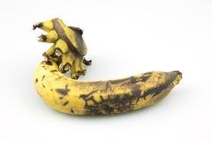 Banana marcia su fondo bianco fotografia stock libera da diritti
