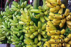 Banana in market. Sell fruit sources in thailand Royalty Free Stock Photography