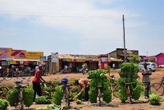 Banana market in slum of Kampala, Uganda, Africa. Kampala, Uganda - Aug 30, 2010: Native people sell bananas by bike in slum of Kampala. Nearly 40% of slum royalty free stock photography