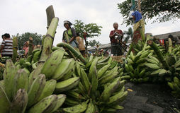 Banana. Merchants offer bananas in a traditional market in the city of Solo, Central Java, Indonesia Stock Photography