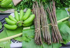 Banana and moringa. Thai herb Stock Images