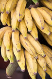 Banana. Natural and organic fresh bananas Stock Photo
