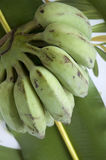 Banana no fundo tropical Imagens de Stock Royalty Free
