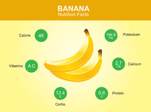 Banana nutrition facts, banana fruit with information, banana vector.  vector illustration
