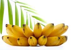 Banana and palm Royalty Free Stock Photos