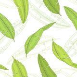 Banana palm leaf graphic color sketch seamless pattern illustration Stock Images