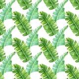 Banana palm leaves seamless pattern stock photography
