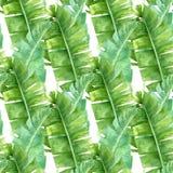 Banana palm leaves seamless pattern royalty free stock image