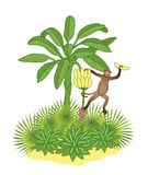 Banana palm and monkey. Banana palm and brown monkey with fruit in hand Royalty Free Stock Photo