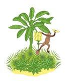 Banana palm and monkey Royalty Free Stock Photo