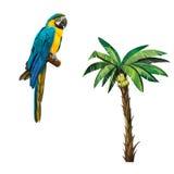 Banana Palm plant tree isolated, Musa acuminata Stock Image