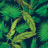 Banana and palm tree leaves on dark blue background Stock Image