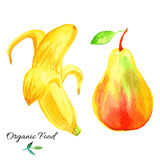 Banana, pear hand drawn painting watercolor illustration on white background, hand drawn sketch food ingredient, organic Royalty Free Stock Image