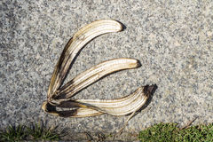 Banana peel on pavement Stock Images