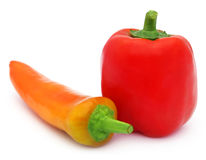 Banana pepper with capsicum. Over white background royalty free stock image