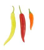 Banana Pepper. Chili pepper on white background (Banana Pepper, Paprika, Garden Pepper, Chili Plant, Red Pepper, Spanish pepper, Sweet Pepper Stock Photos
