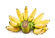 Banana(Pisang Mas) Stock Photos