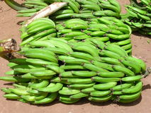 banana plant Στοκ φωτογραφίες με δικαίωμα ελεύθερης χρήσης
