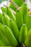 Banana plant with green bananas Stock Photo