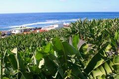 Banana plantation village Atlantic ocean, La Palma Royalty Free Stock Images