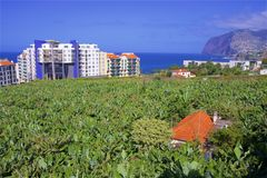 Banana plantation in Funchal, Madeira, Portugal royalty free stock images