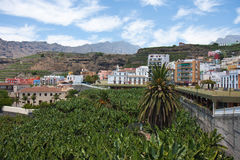 Banana Plantation La Palma, Canary Islands Royalty Free Stock Photo