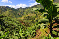 Banana plantation in the mountains Royalty Free Stock Photos