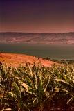 Banana Plantation near Lake Tiberias. Banana Plantation on the Golan Heights near Kinneret in Israel at sunset. Banana plantation on the bank of the lake Royalty Free Stock Image
