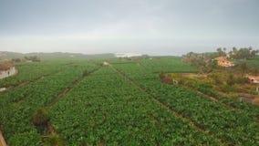 Banana plantation near the ocean stock video