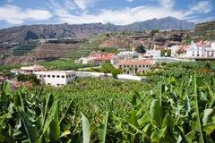 Banana plantation at Tazacorte, La Palma Stock Photo