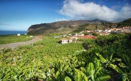 Banana plantation at Tazacorte Stock Photography