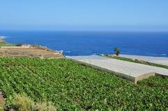 Banana plantation in Tenerife, Spain Stock Image