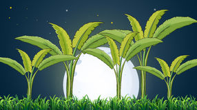 A banana plantation under the white fullmoon Royalty Free Stock Photos