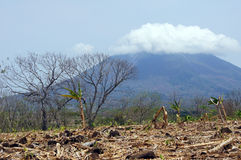 Banana plantation and volcano Stock Image