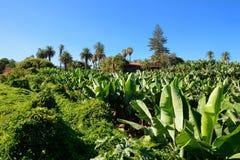Banana plantation Royalty Free Stock Photos