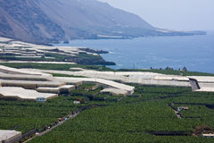 Banana plantations along the coast of La Palma Stock Photos