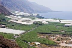 Banana plantations at La Palma, Canary Islands Royalty Free Stock Images